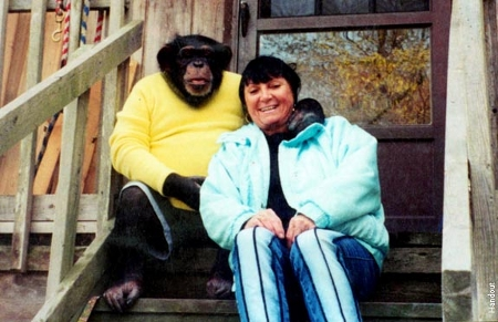 Pri-Mates - The Happy Couple: Bizarre Love of Gal and Ape