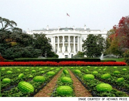 The White House Watermelon Patch