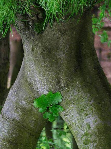 Mother Nature Tree - Treehuggers are fapping right now