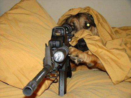 Dog Sniper