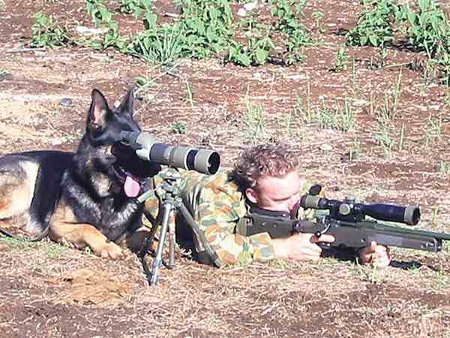 Dog Spotter - Man's Best Friend