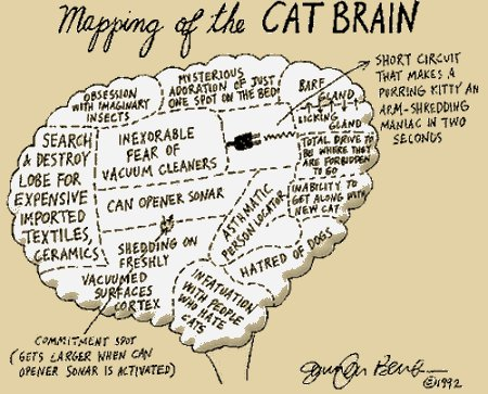 Cats Brains Can Release Endorphins At Will