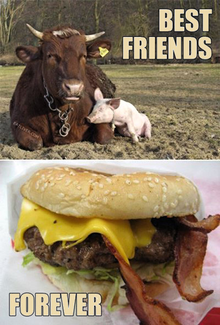 Cow and Pig - Best Friends Forever