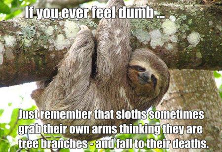 Dumb Sloths