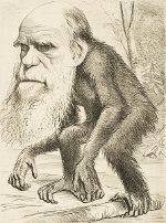 1871 editorial cartoon depicting Charles Darwin as an ape