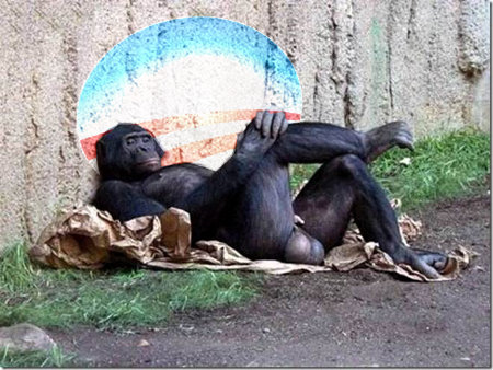 Chimp Relaxing - Waiting on EBT and his new Obama Phone