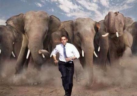 Obama Elephant Stampede