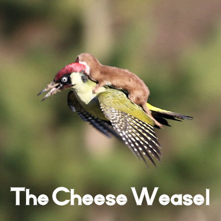 """The Cheese Weasel is a clever and cunning rodent, bent on quiet world domination."