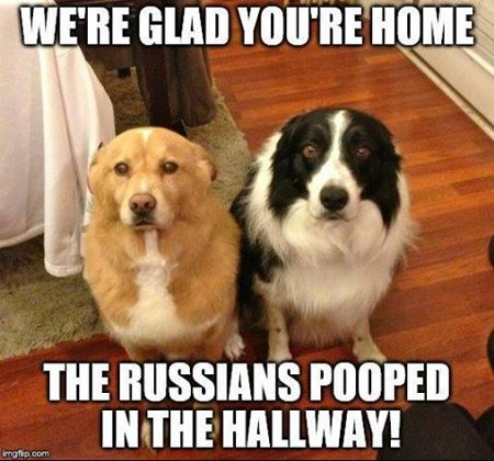 Image Result For Funny Dog