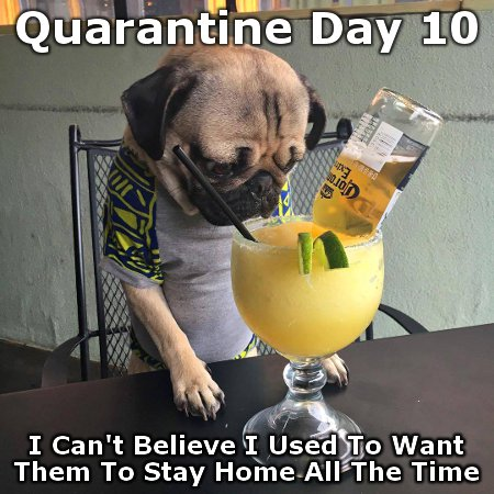 By Day 10 of the Quarantine even dogs are ruing their wish that their humans would stay home