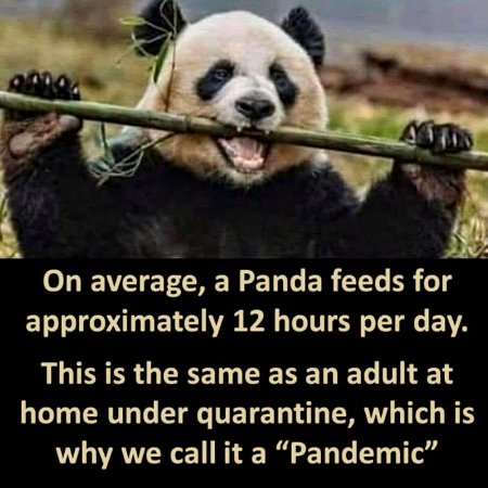 "That's Why We Call It A ""Pandemic!"""