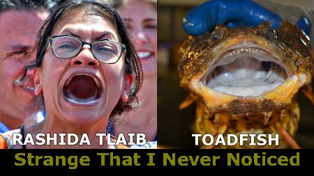 Strange That I Never Noticed That An Angry Rashida Tlaib Looks Like An Angry Toadfish
