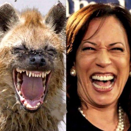 Hyena Harris