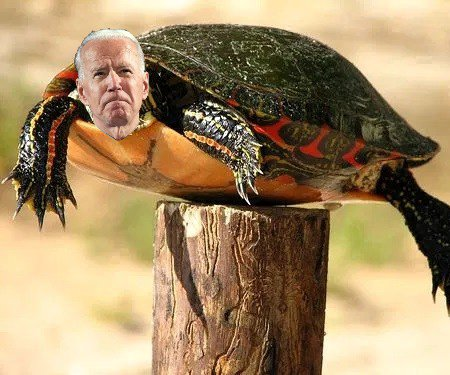 "Creepy Uncle ""Bad Touch"" Biden aka ""President"" Post Turtle"