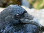 The Eye of the Raven